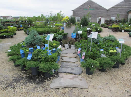Help Choosing Plants - Jensen's Nursery and Garden Centre - Container Gardening - Winnipeg - Manitoba