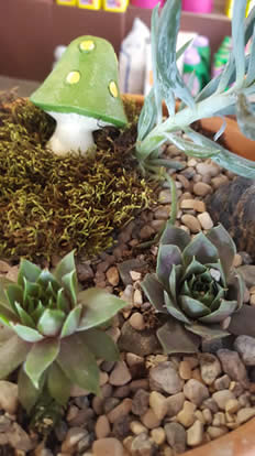 SUCCULENTS, FAIRY GARDENING, MINIATURE GARDENING, PLANTING CLASSES, MUSHROOM