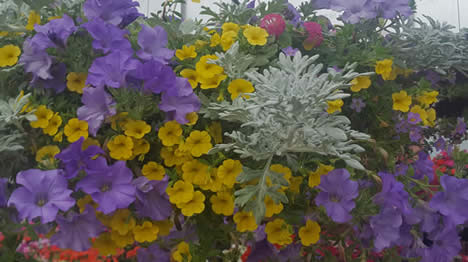 annuals, baskets, deals on annuals, jensen nursery, winnipeg garden centres