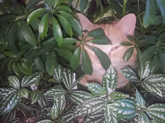 tropical plants, indoor plants, garden center cats, planting workshops, jensen nursery