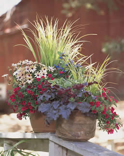 container gardening, annuals in containers, annual recipes, jensen nursery and garden centre, annuals