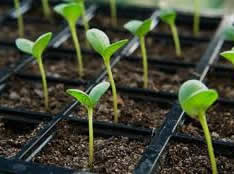 spring seedlings, planting seeds, seedlings, jensen nursery and garden center